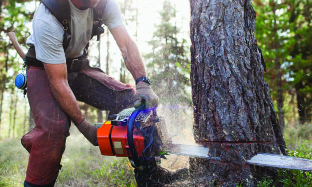 Best Gas Pole Saw That Easy To Maneuver – An Ultimate Guide